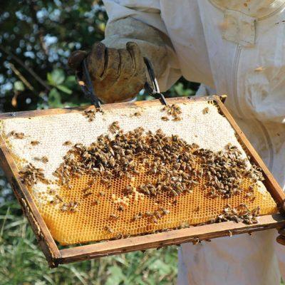 apicoltura-galli-bg